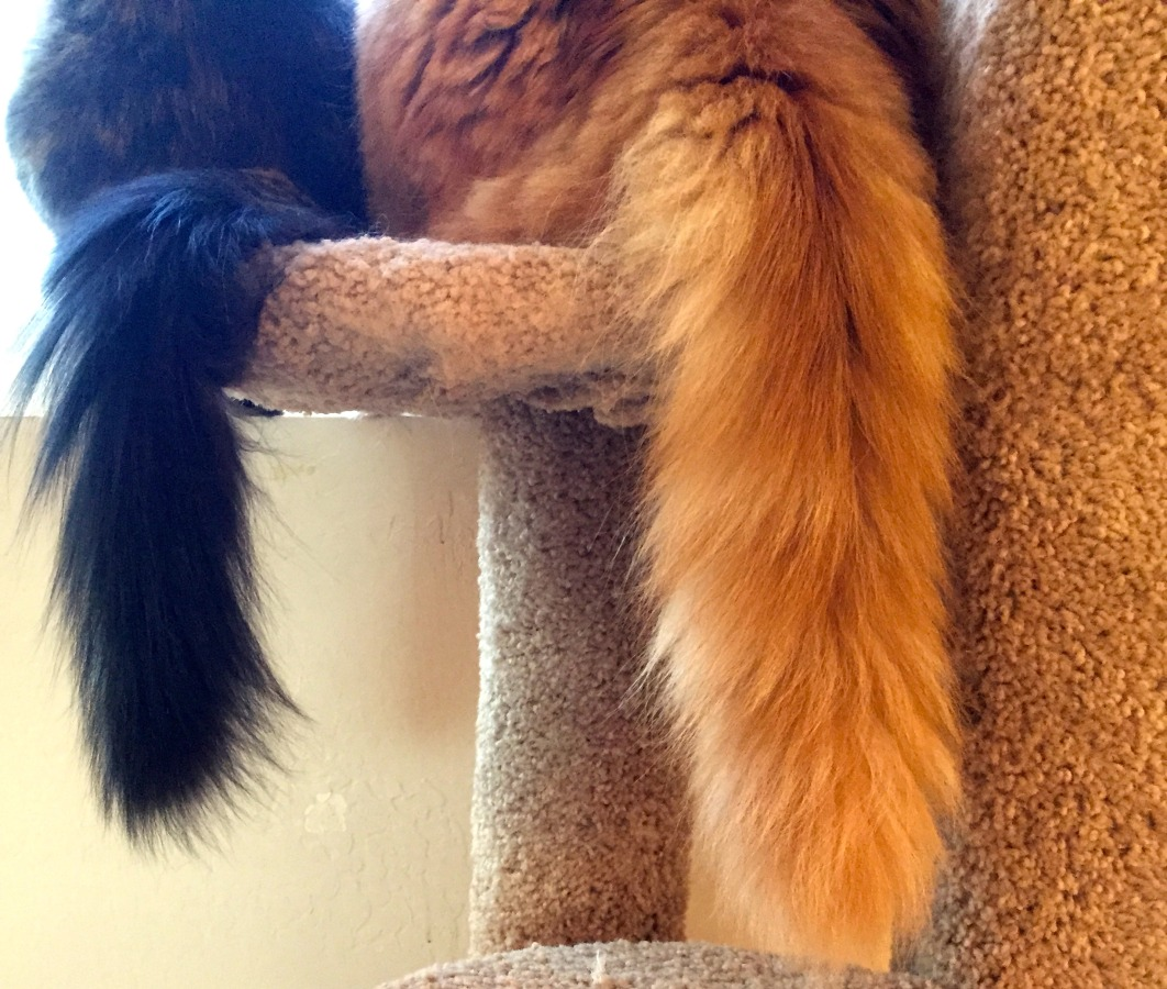 Tree Tails