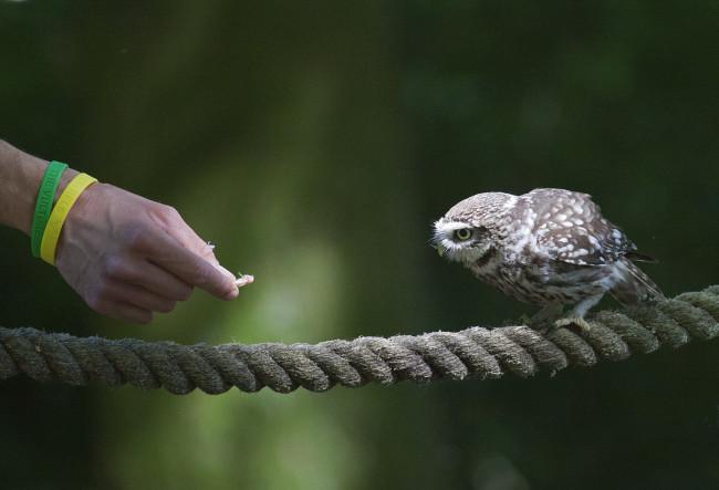 Owl Trust