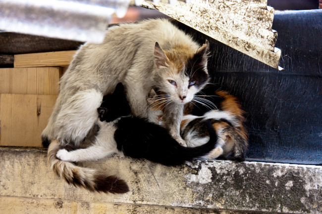 Mother Cat Kittens