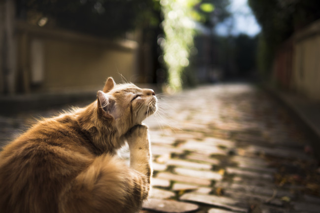 Street Cat Scratches