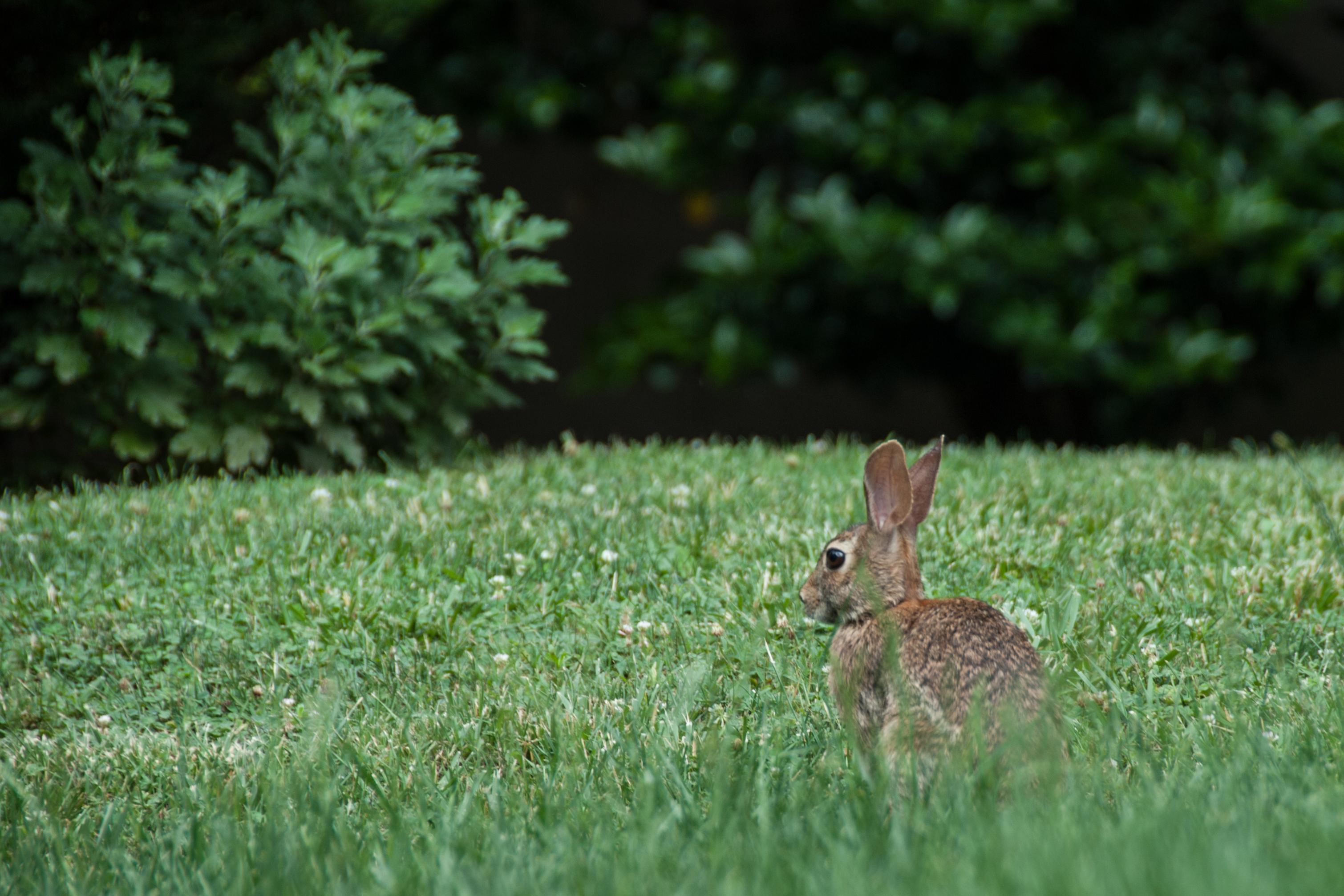 rabbit u2013 5 minutes with joe