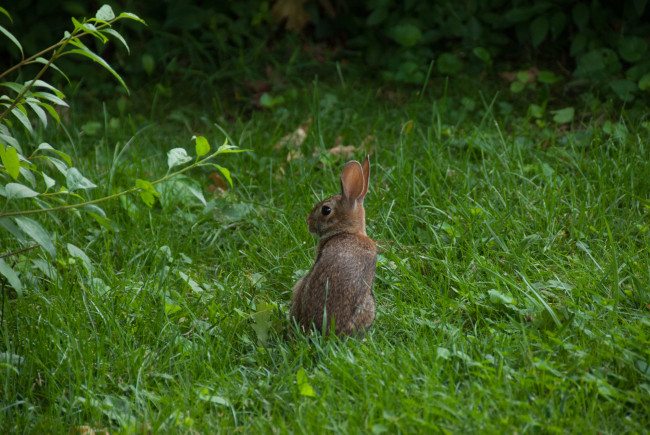 Bunny Backyard