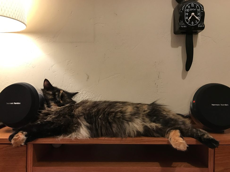 cat-on-a-cool-wooden-desk