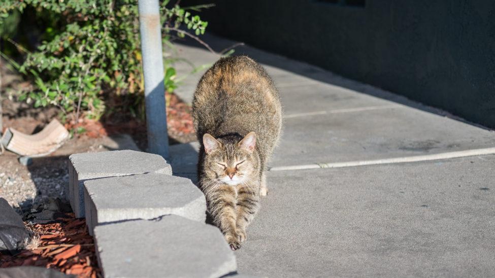 Hey Stretch Cat