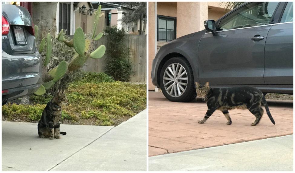 stalker-cat